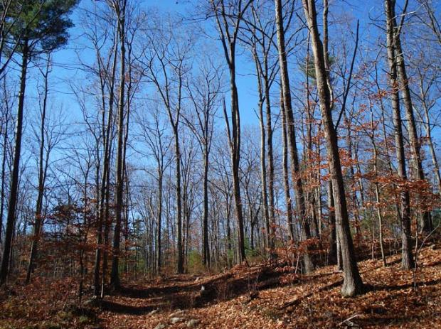 1 Spaulding Town Forest - hardwood forest photo