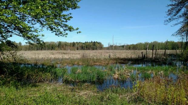 Sudbury_Smith_wetland